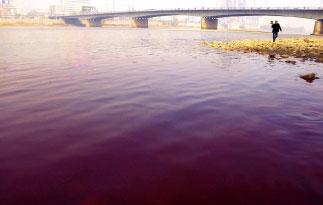 紐約時報:中國高成長的代價 痛苦的黃河