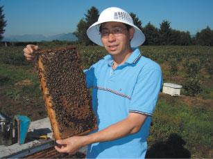 >加拿大不存在蜂群衰竭失調