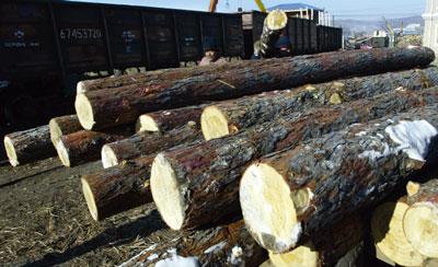 >華郵:非法伐木下的中國木製家具出口(上)