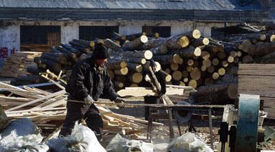>華郵:非法伐木下的中國木製家具出口 (下)