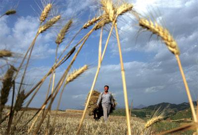 >農民的土地革命