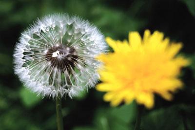 試著為「石頭開花」解謎