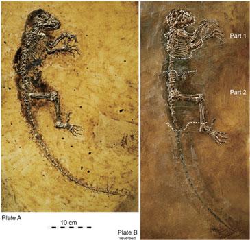 找到填補進化史空白的化石?專家指出錯誤