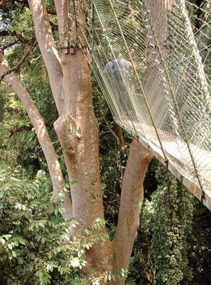 【生態行旅】遇見,婆羅洲——懸空步道觀生態