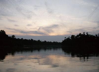 【生態行旅】遇見,婆羅洲 暗夜獵奇 充滿無限想像