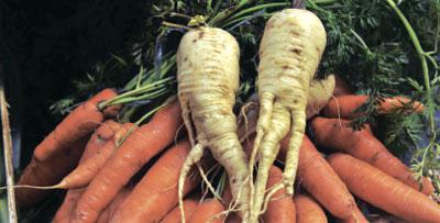 蘿蔔能包裝成人參嗎?——發自北大的質問