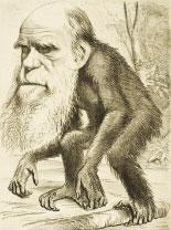 【新思維】進化論 一個永遠的假說