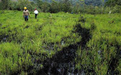 厄瓜多爾啟動雨林保護計畫