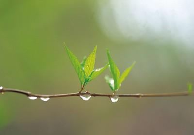 人生感悟 ∣ 臨窗品茶聽雨聲