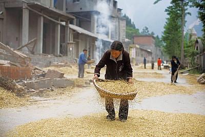 中國糧食生產隱患