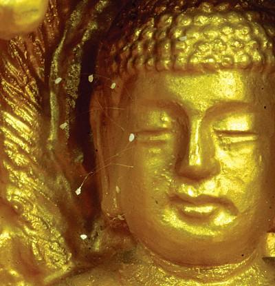 天象人間|「三千年一現」優曇婆羅花現天機