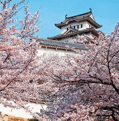 天涯遊蹤|落英繽紛 「花見」在日本
