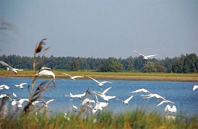 生態行旅|鰲鼓濕地 眾鳥喧譁