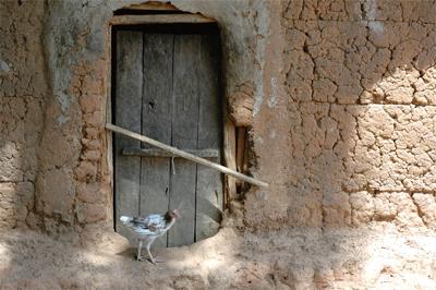 為什麼讓禽流感越來越嚴重