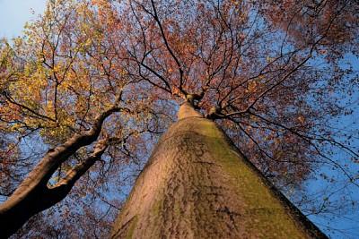 生態行旅|埃森擁抱樹木 喚醒環保意識