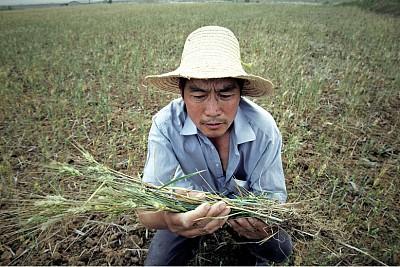 土地污染 中國糧食危機無法避免
