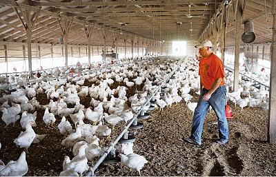中國雞肉叩關美國市場疑雲