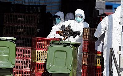 流感H3N2襲港奪126命 大陸靜音