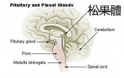 腦中第三隻眼 通往另外空間的窗口
