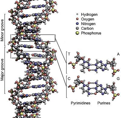研究:人體含外來基因 進化論無法解釋