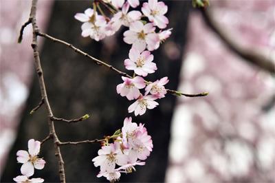 誰道四月芳菲盡 笑看人間始春風