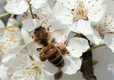 研究:蜂蜜勝於抗生素 治療多重耐藥細菌