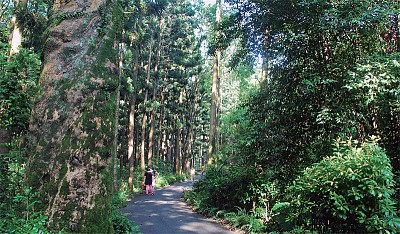 散步嘉義市「山仔頂植物園」城市裡一條孤寂的野溪