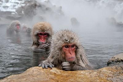 踏雪尋猴 走訪日本祕境地獄谷