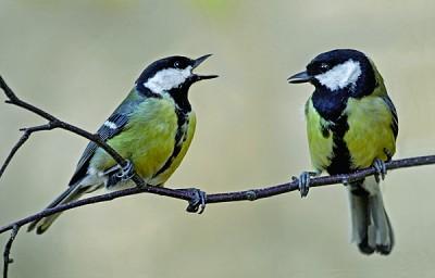 >「禽有禽言」研究發現鳥兒溝通講究語法