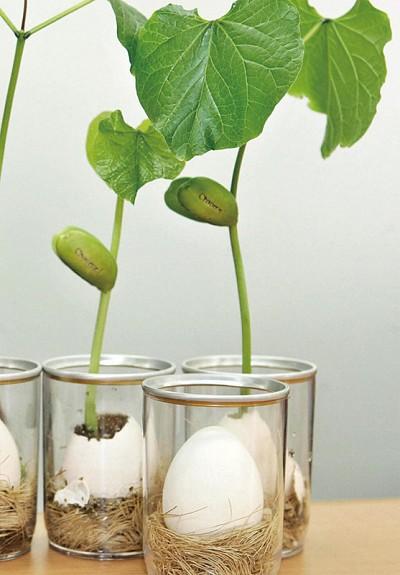 科學家深信:植物有意識和智能