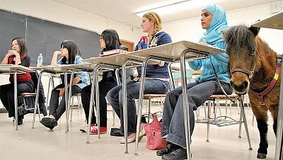 美國教授調整教學方式 幫助中國學生學習