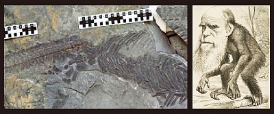 最新化石研究 鬆動了進化論脆弱基石
