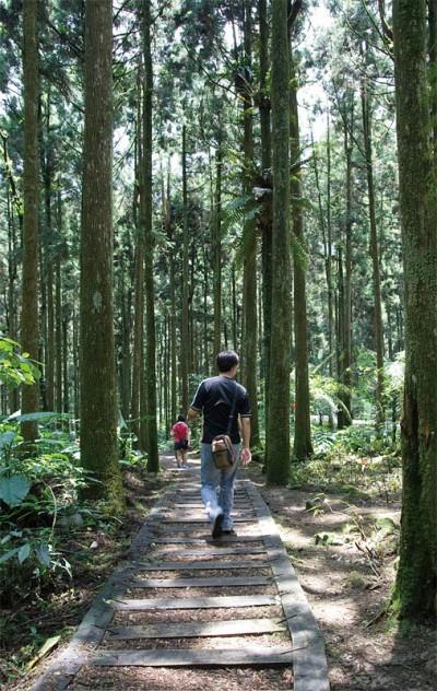 >穿梭溪頭森林小徑 探尋植物名人足跡