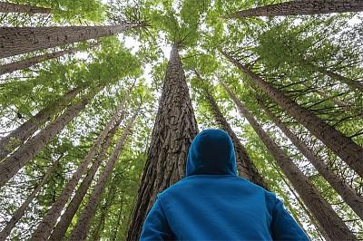 >德國專家:樹喜歡群居 懂得友愛和互助
