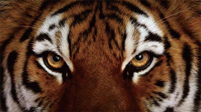 虎吃人的背後是人吃人
