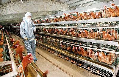 陸H7N9禽流感已奪數十命 江蘇疫情最重